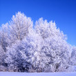 Beautiful winter landscape of frozen trees — Stock Photo