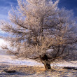 Royalty-Free Stock Photo: Winter landscape of big frozen tree in sunshine