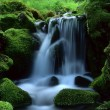 Beautiful landscape of flowing water — Stock Photo #4297270