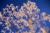 Frozen tree in sunshine — Stock Photo