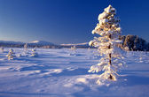 Beautiful winter landscape of big frozen tree — Stock Photo