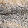 Lynx fur closeup - 图库照片