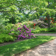 Shady Rhododendron and Azalea Garden — Stock Photo
