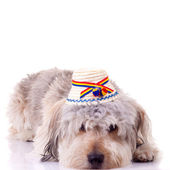 Sad bearded collie puppy — Stock Photo