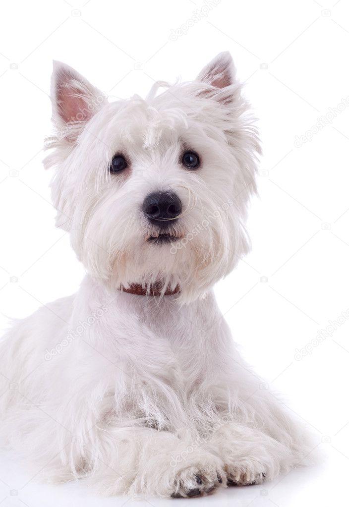 动物贴图白背景