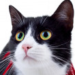 Face of cat — Stock Photo
