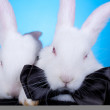 Couple cute white baby rabbits — Stock Photo #5231219