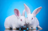 Easter bunnies — Stock Photo