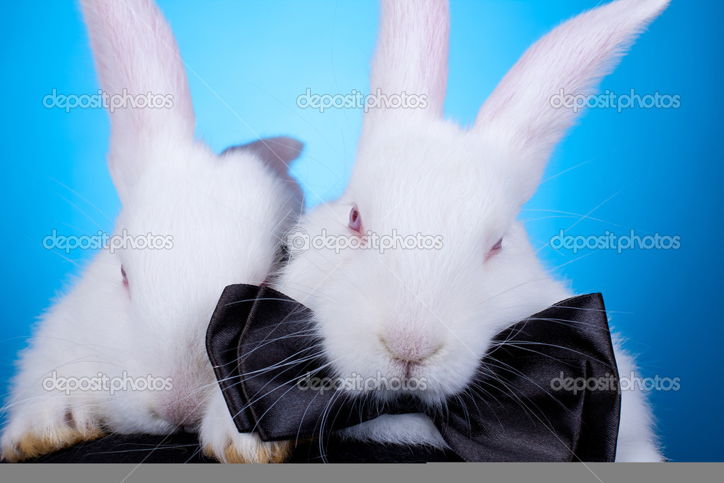 Cute White Baby Rabbits of Cute White Baby Rabbits