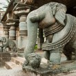 indian elephant — Stock Photo
