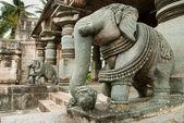 Indian elephant — Stock Photo