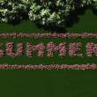 "The word ""Summer"" written with flowers. — Stock Photo"