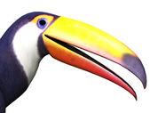 Closeup of toucan bird — Stockfoto