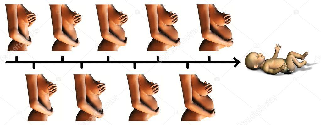 gewichtszunahme 5 monat schwangerschaft