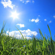 Green grass hills under midday sun — Stock Photo #5372267