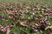 Autumn leaves fallen on grass lawn — Stock Photo