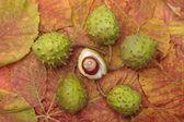 Castanhas e closeup de folhas de outono — Foto Stock