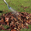Autumn leaves fallen on grass lawn - Stock Photo
