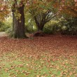 Autumn leaves fallen on grass lawn — Stock Photo #4348119
