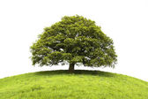 Tree and field isolated on white — Stock Photo