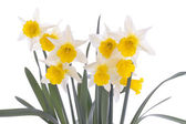 Spring flowers isolated over white background — Stockfoto