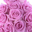 Bouquet of roses over white background — Stock Photo