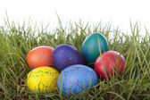 Easter eggs on grass over white — Stock Photo