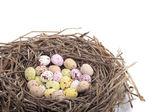 čokoládová vajíčka v ptačí hnízdo nad bílým pozadím — Stock fotografie
