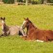 Royalty-Free Stock Photo: Racehorses