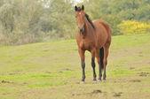 Tävlingshästar — Stockfoto