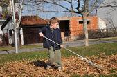 Jongen verzamelt bladeren — Stockfoto