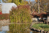 Trädgård med en sjö — Stockfoto