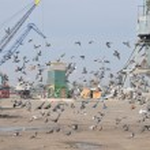 Crane, port, ship — Stock Photo #4340703