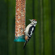 Great Spotted Woodpecker on feeder — Stock Photo #5188964