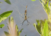 Spider in web — Stock Photo