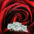 Stock Photo: Engagement Ring Inside of Red Rose