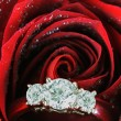 Engagement Ring Inside of Red Rose — Stock Photo
