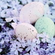 Easter Eggs Hidden in Spring Flowers — Stock Photo