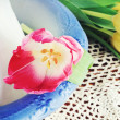 Foto Stock: Tulip and Pitcher