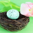 Bird's Nest and Tulip — Stock Photo