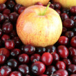 Apples and Cranberries - Stock Photo