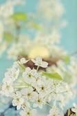 Flores de árbol — Foto de Stock