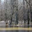 Stock Photo: Spring flooding in woods