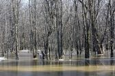 Spring flooding in the woods — Stock Photo