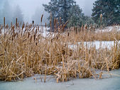 Frozen Marsh Area on an Overcast Day — Stock Photo