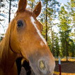 Horse Portrait in Evening Hour — Stock Photo #4351435