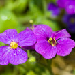 Pretty Violet Flowers in a Greenhouse on a Sunny Day — Foto Stock
