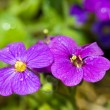 Pretty Violet Flowers in a Greenhouse on a Sunny Day — 图库照片