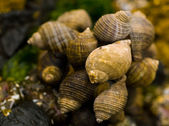 Macro closeups of shells taken at the tide pools at Canon Beach, Oregon — Stock Photo