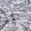 Stock Photo: Snow Covered Bare Tree Branches in Winter